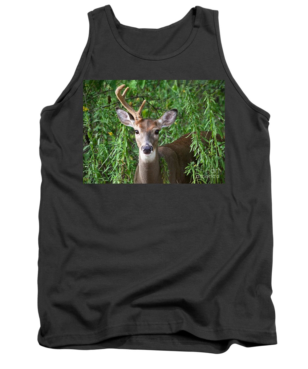 Color Photography Tank Top featuring the photograph Half A Buck by Sue Stefanowicz