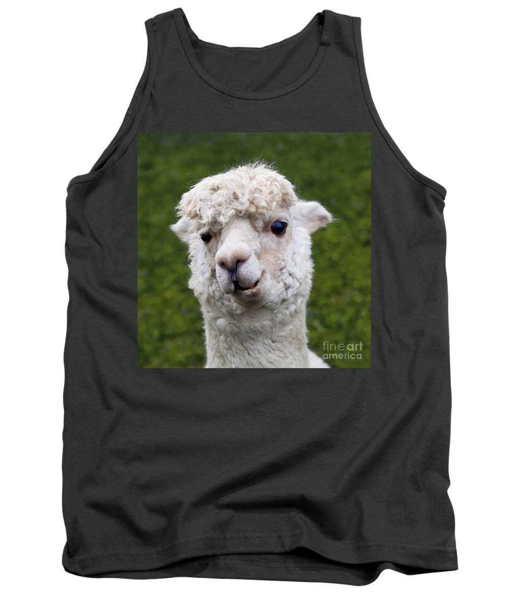 Animals Tank Top featuring the photograph Here's Lookin' At You Kid by Barbara McMahon