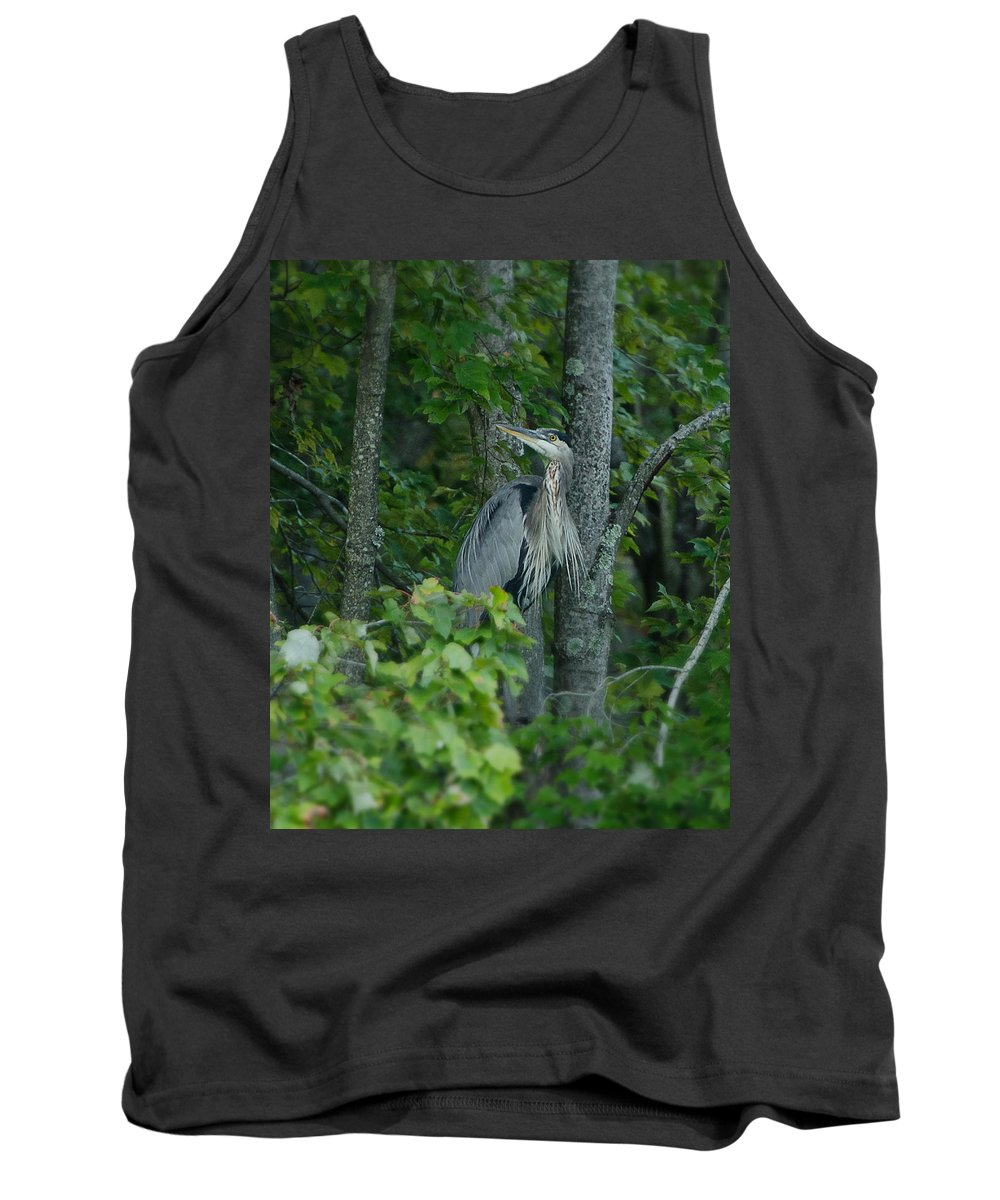 Heron Tank Top featuring the photograph Heron On A Limb by Shirley Tinkham