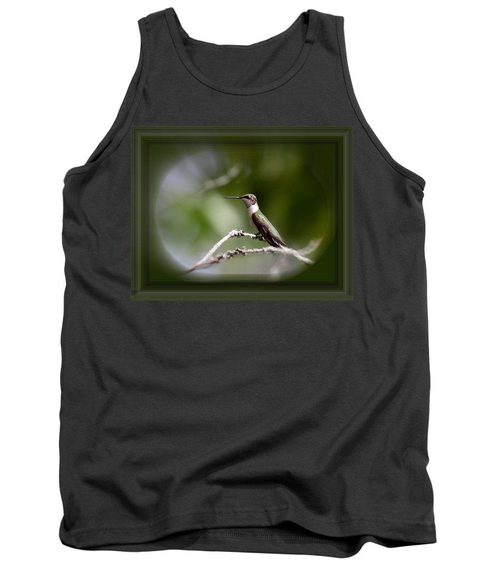 Hummingbird Tank Top featuring the photograph Hummingbird - Bird by Travis Truelove