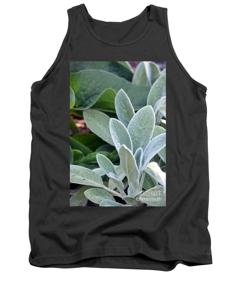 Lambs Tank Top featuring the photograph Lamb's Ear by Maria Urso