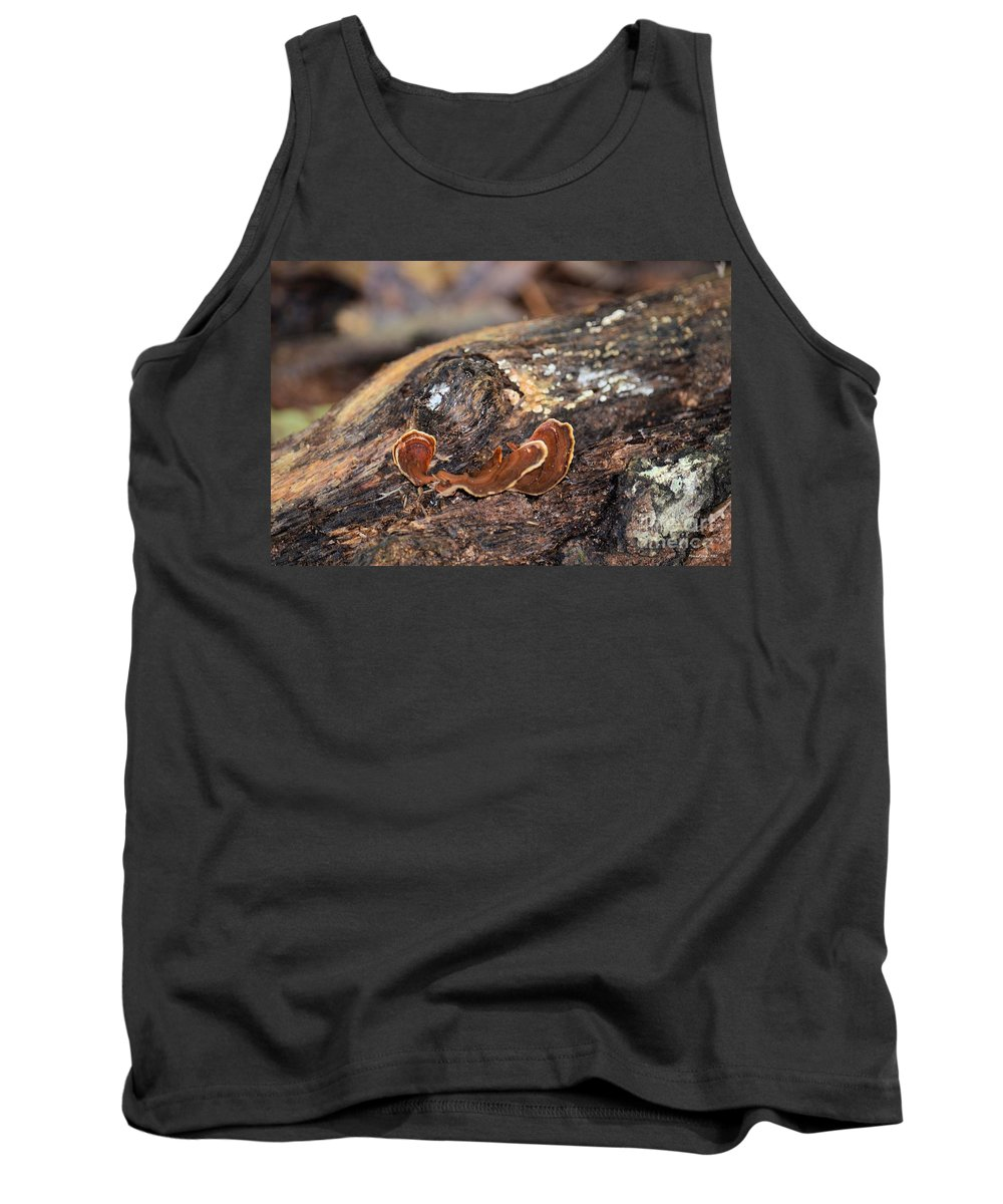 Life Tank Top featuring the photograph Life On A Log 3 by Maria Urso