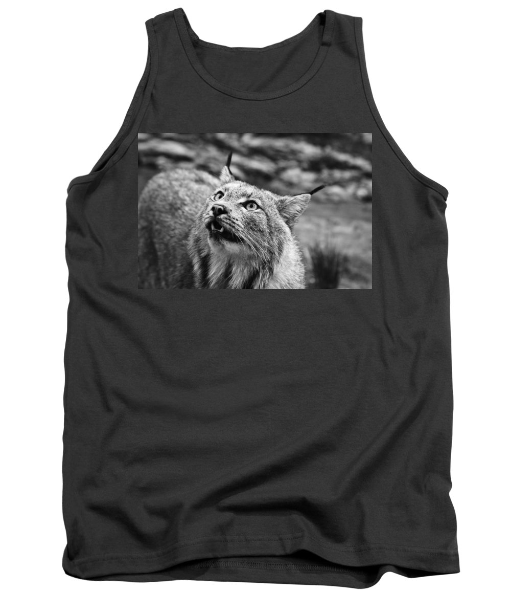 Lynx On Alert Tank Top featuring the photograph Lynx On Alert by Wes and Dotty Weber