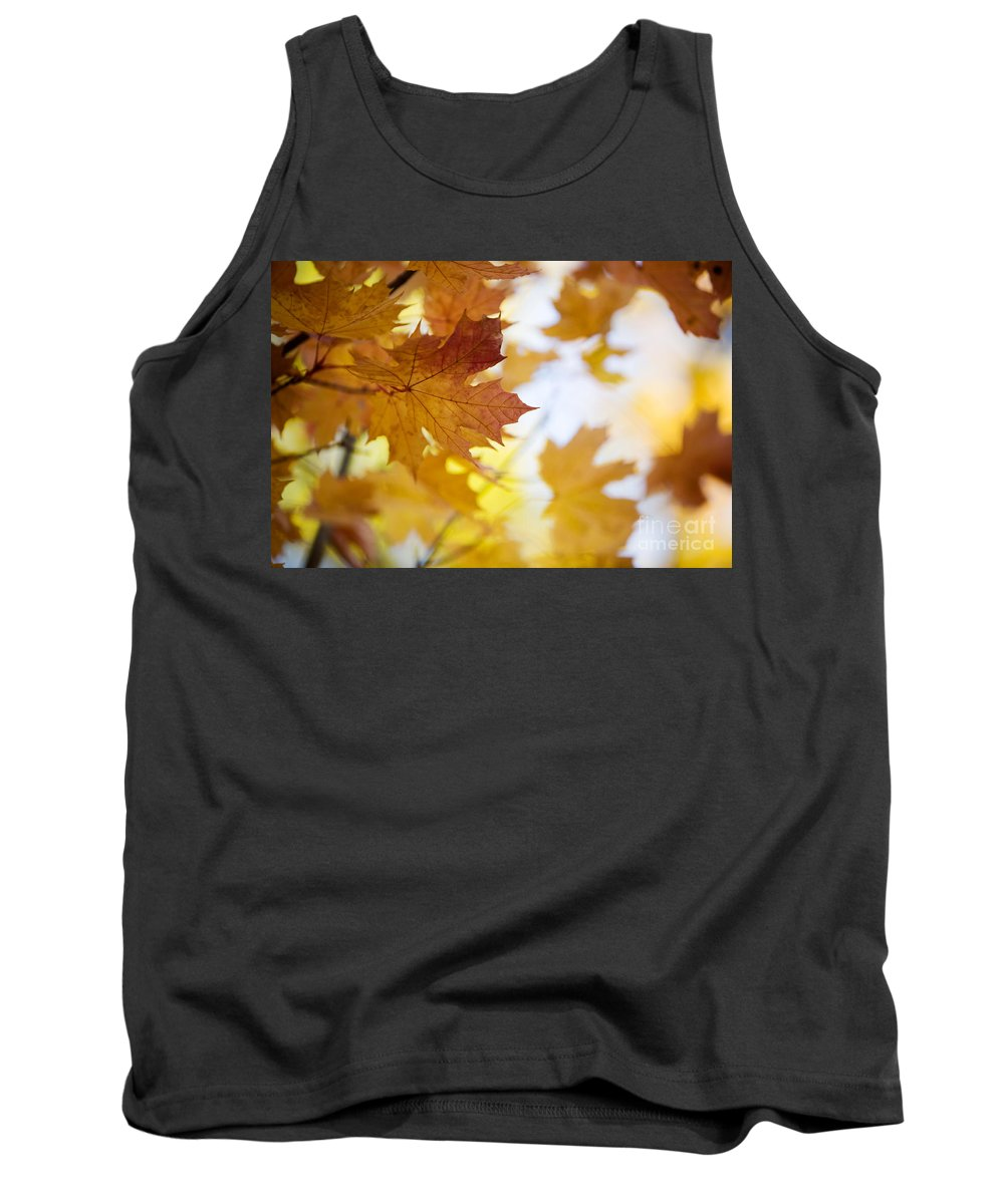 Kamo Tank Top featuring the photograph Maple Tree In Autumn by Kati Finell
