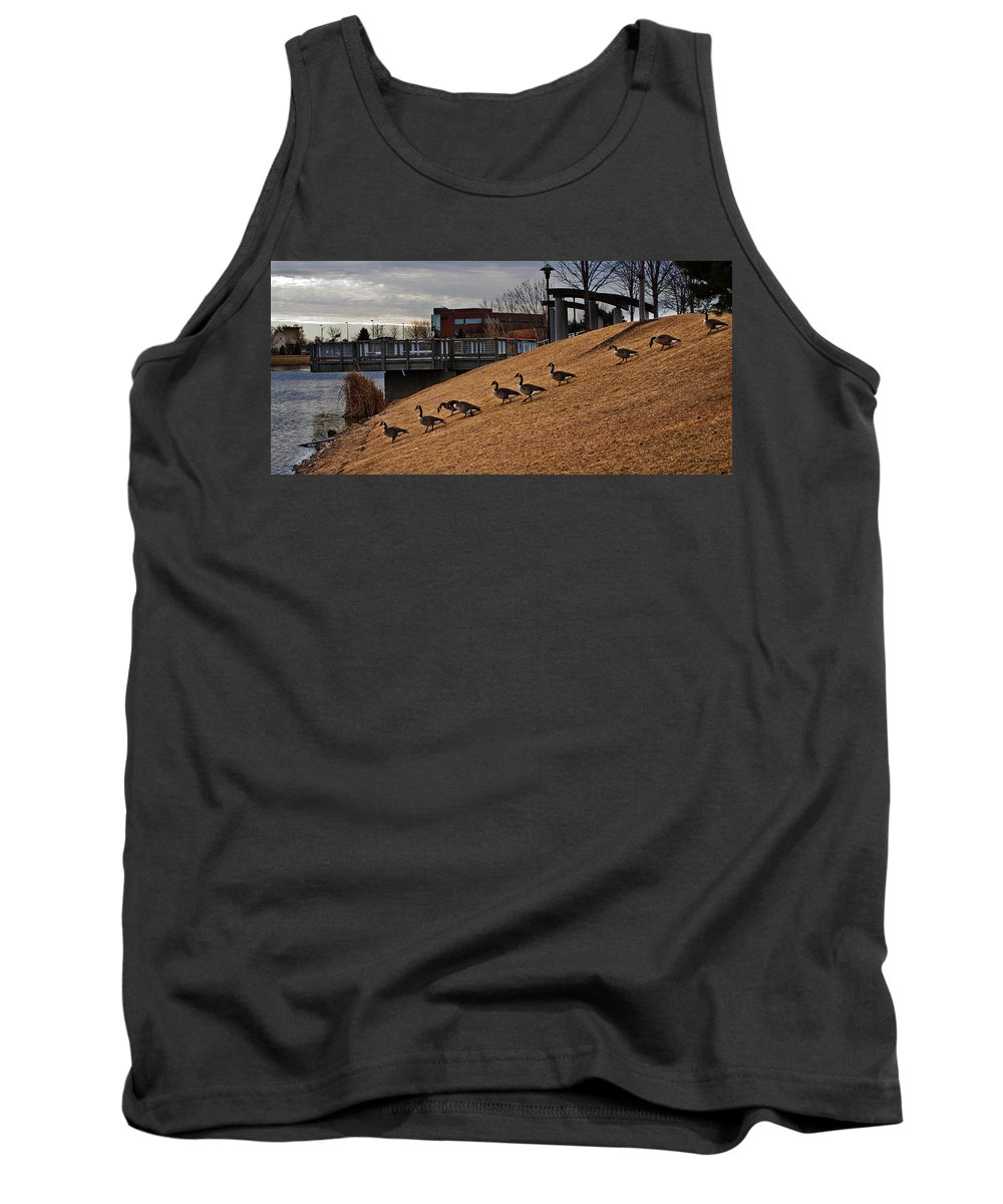 Lakeside Canada Goose Tank Top featuring the photograph March To The Water by Edward Peterson