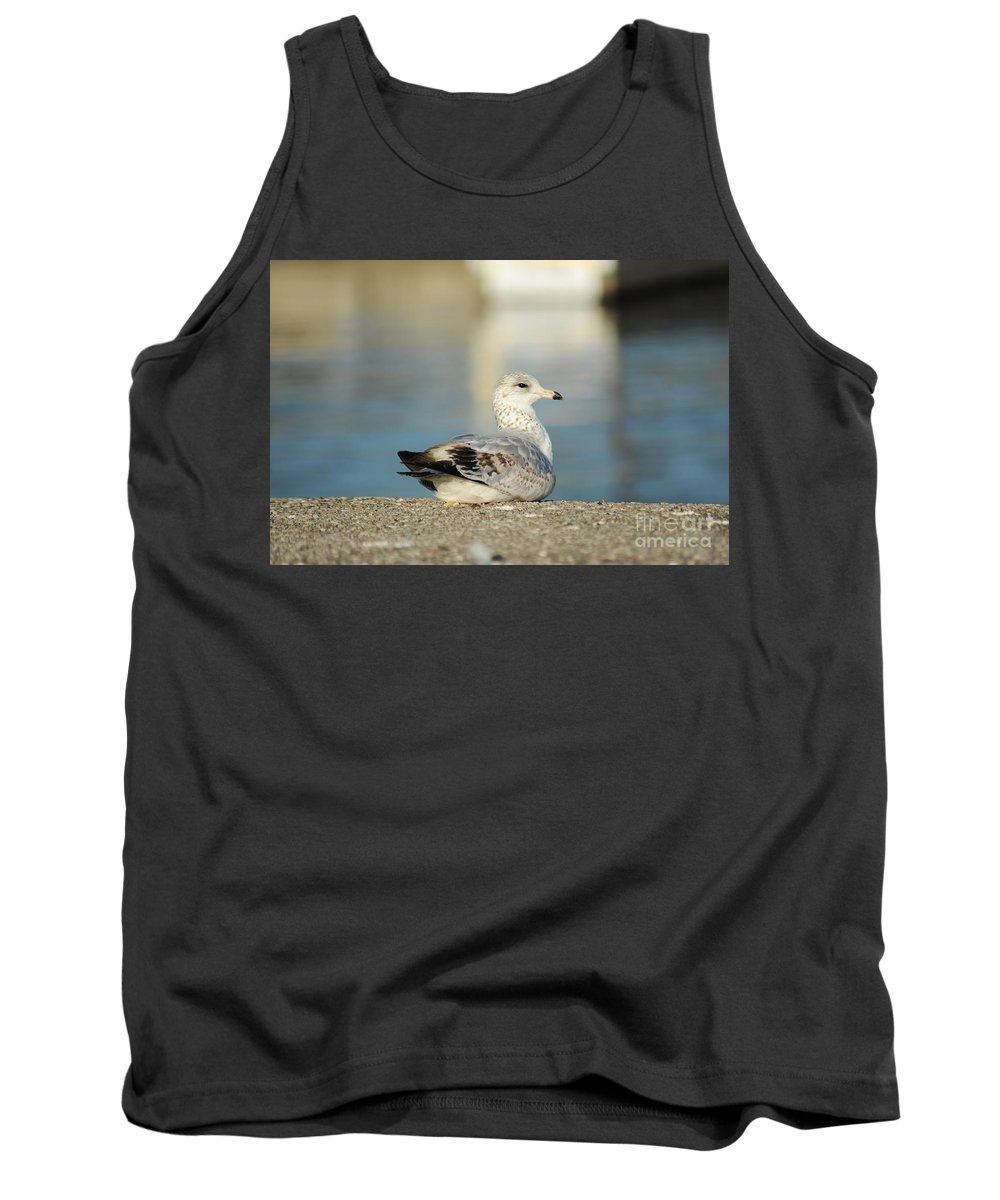 Pose Tank Top featuring the photograph Poser by Elaine Mikkelstrup