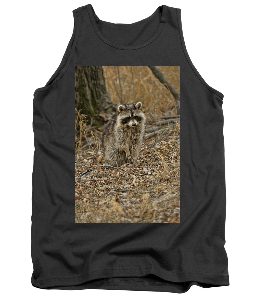 Squaw Creek Tank Top featuring the photograph Raccoon by Alan Hutchins