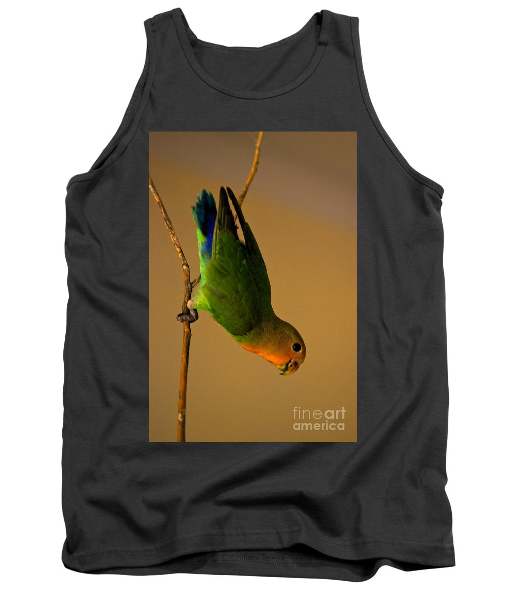 Lovebird Tank Top featuring the photograph Rainbow Bird by Syed Aqueel