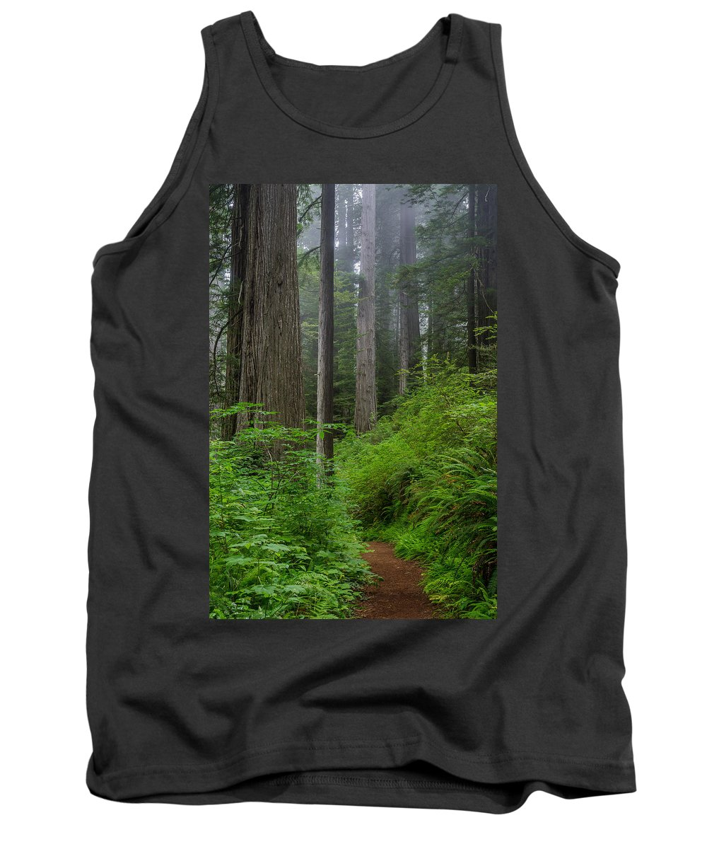 Redwoods Tank Top featuring the photograph Redwoods Along Ossagon Trail by Greg Nyquist