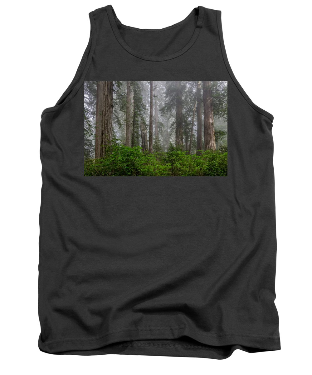 Redwoods Tank Top featuring the photograph Redwoods In Breaking Mists by Greg Nyquist