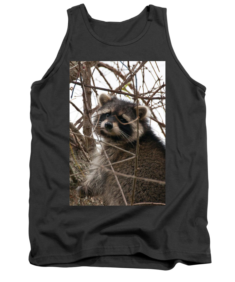 Wildlife Tank Top featuring the photograph Rocky Raccoon by Guy Whiteley