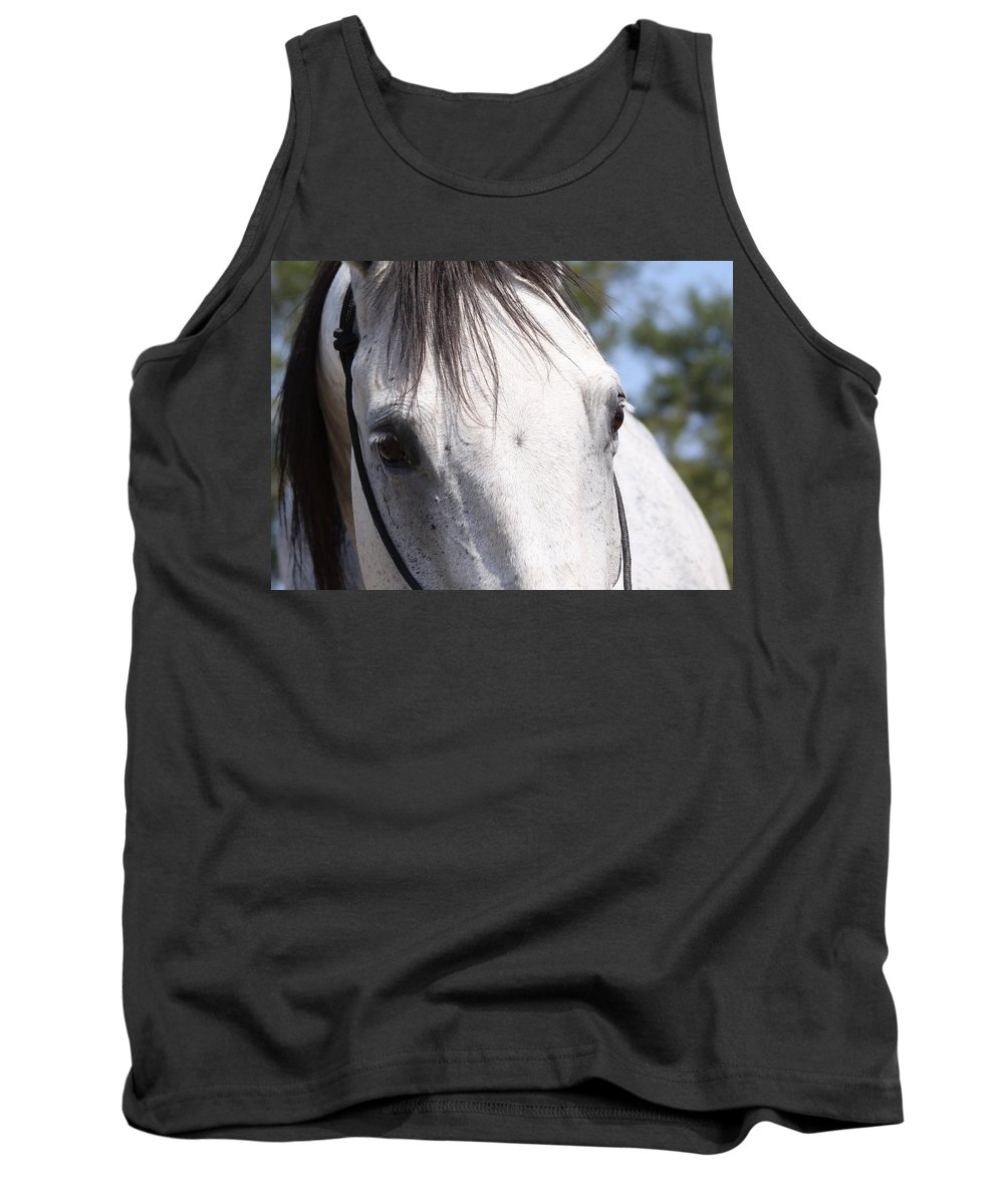 Horse Tank Top featuring the photograph Show Horse At Mule Days by Travis Truelove