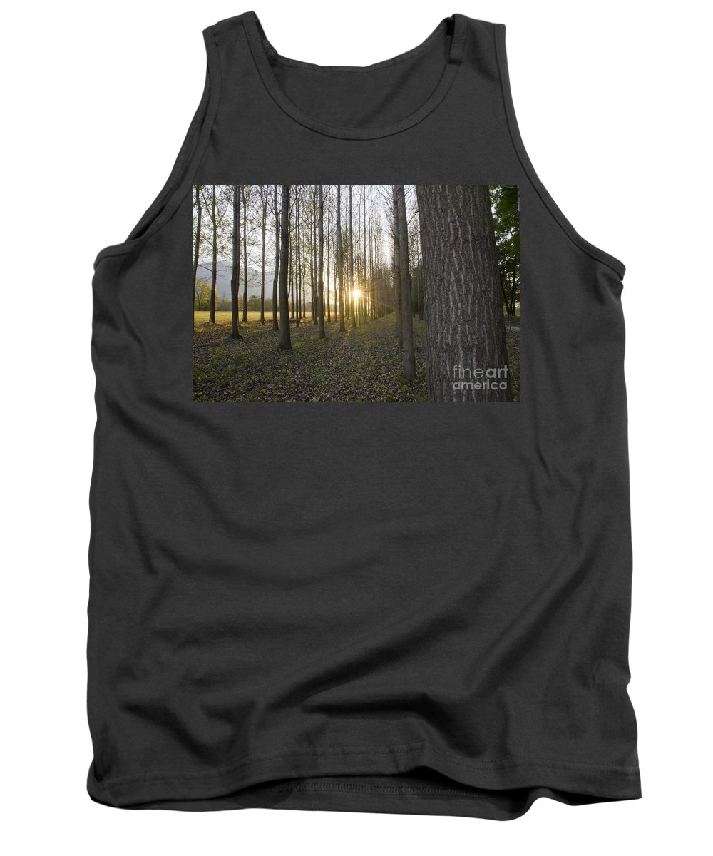 Field Tank Top featuring the photograph Sunlight In The Forest by Mats Silvan