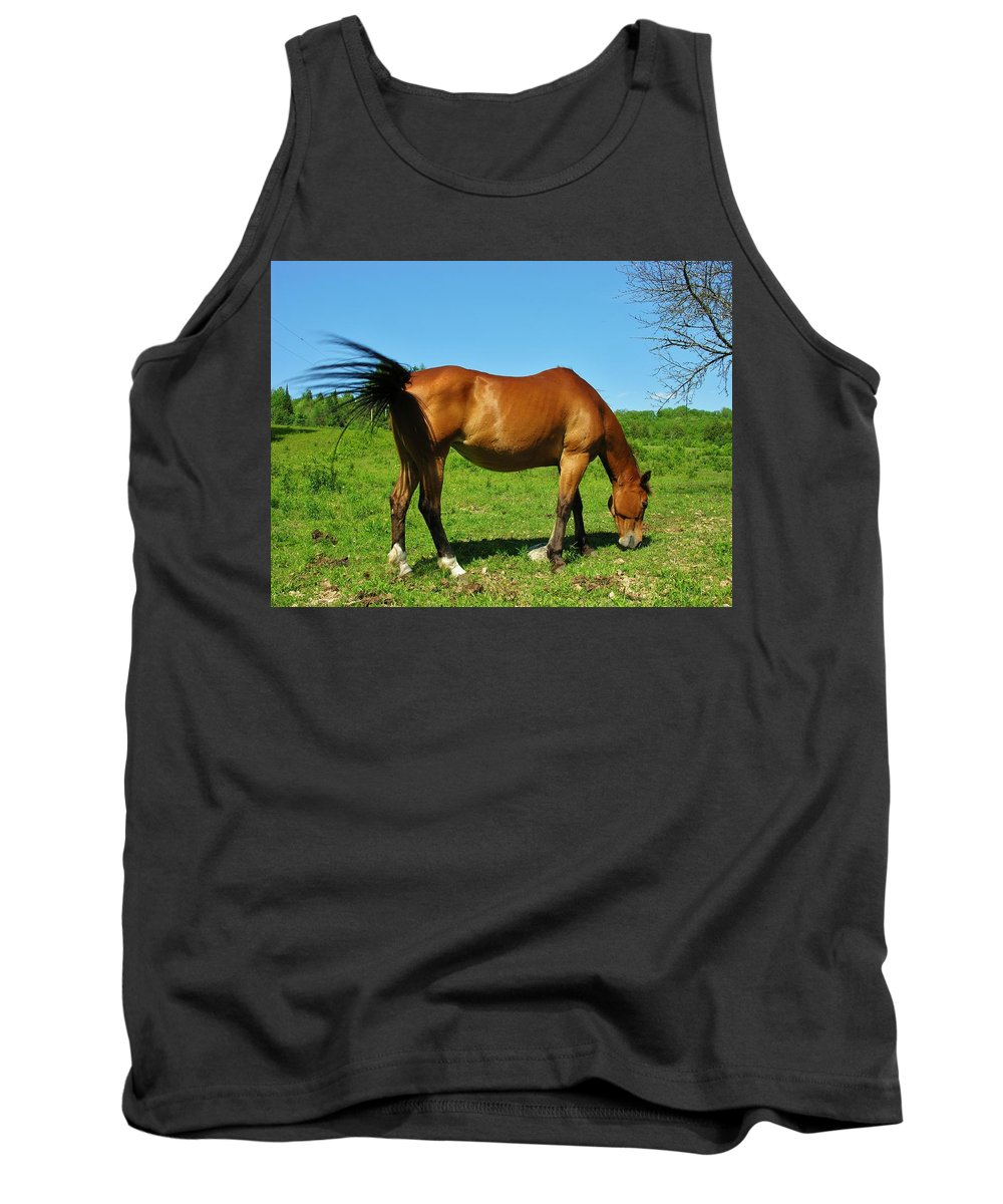 Horse Tank Top featuring the photograph Tail Swatting Flies by Sherman Perry