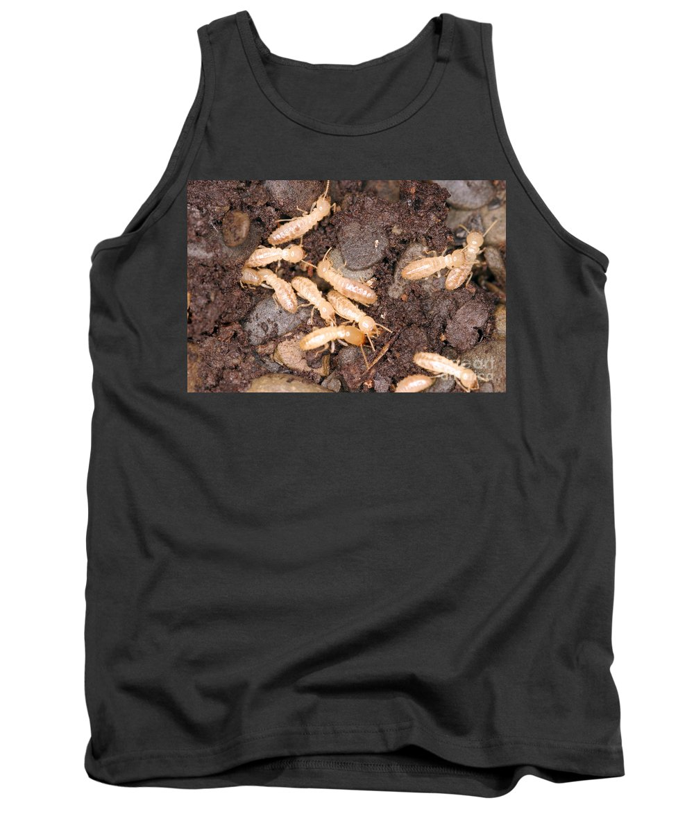 Animal Tank Top featuring the photograph Termite Nest Reticulitermes Flavipes by Ted Kinsman