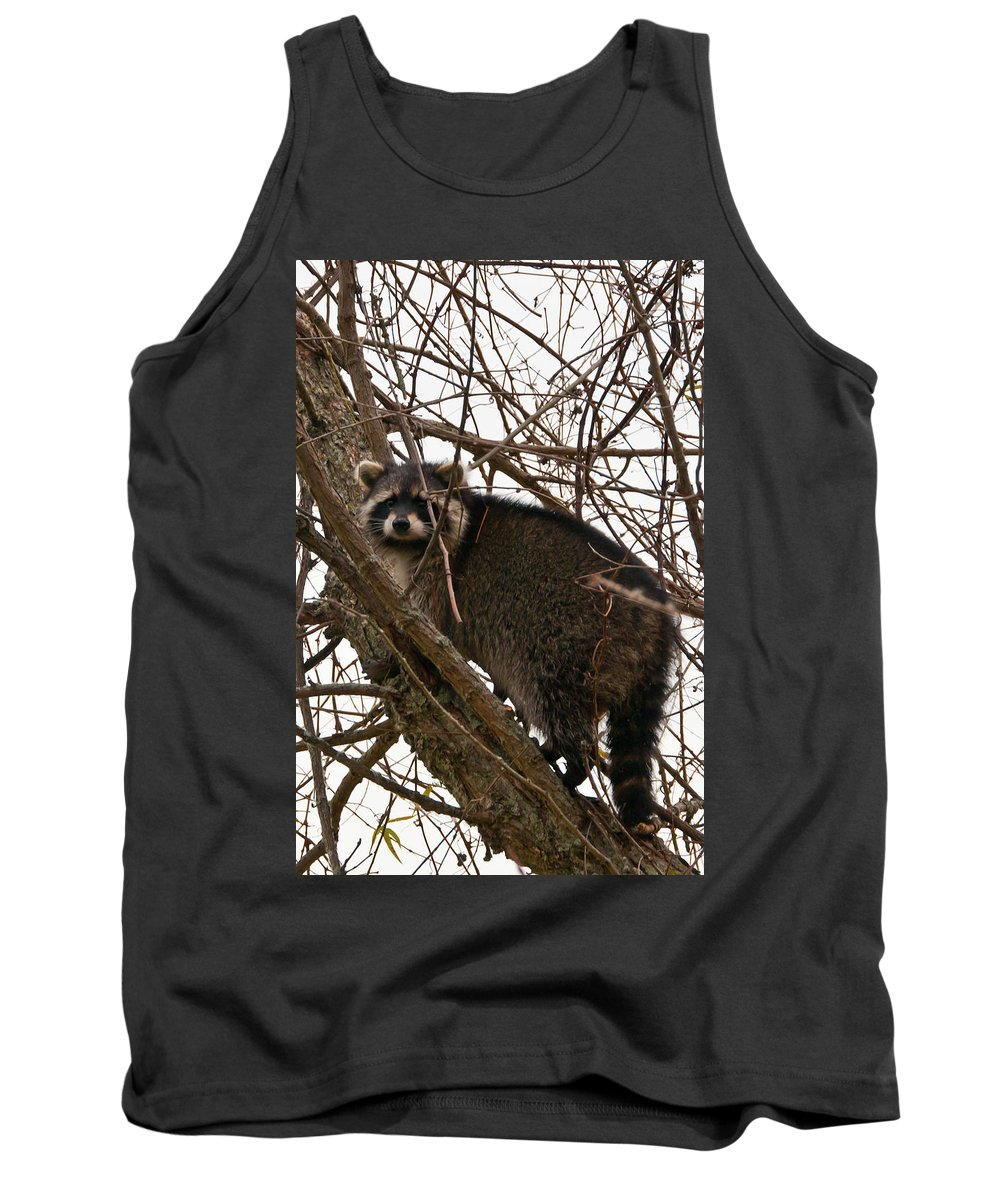 Wildlife Tank Top featuring the photograph Treed 3331 by Guy Whiteley