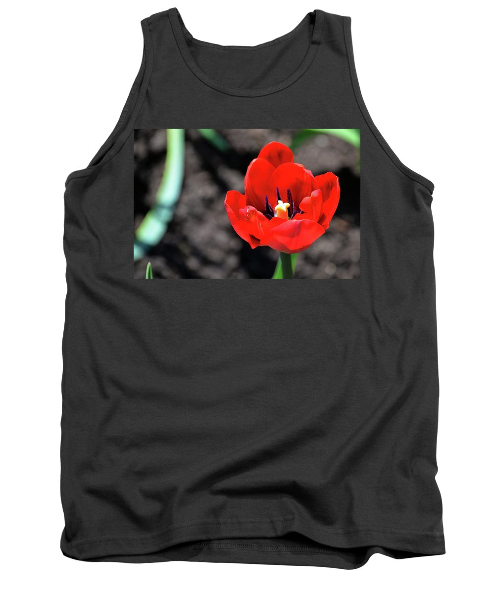 Tulips Tank Top featuring the photograph Tulips Blooming by Pravine Chester