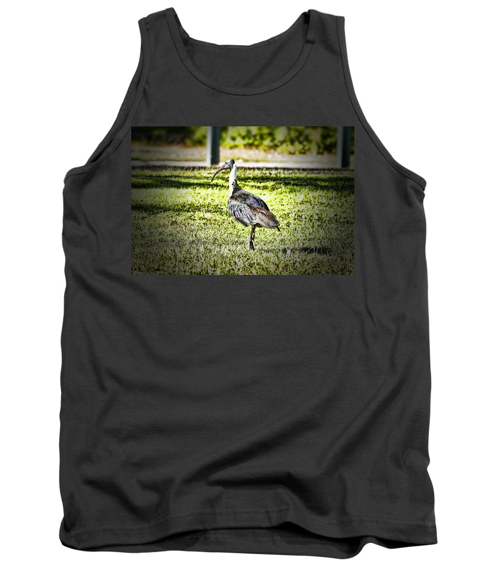 Straw-necked Ibis Tank Top featuring the photograph Uglier Than Most by Douglas Barnard
