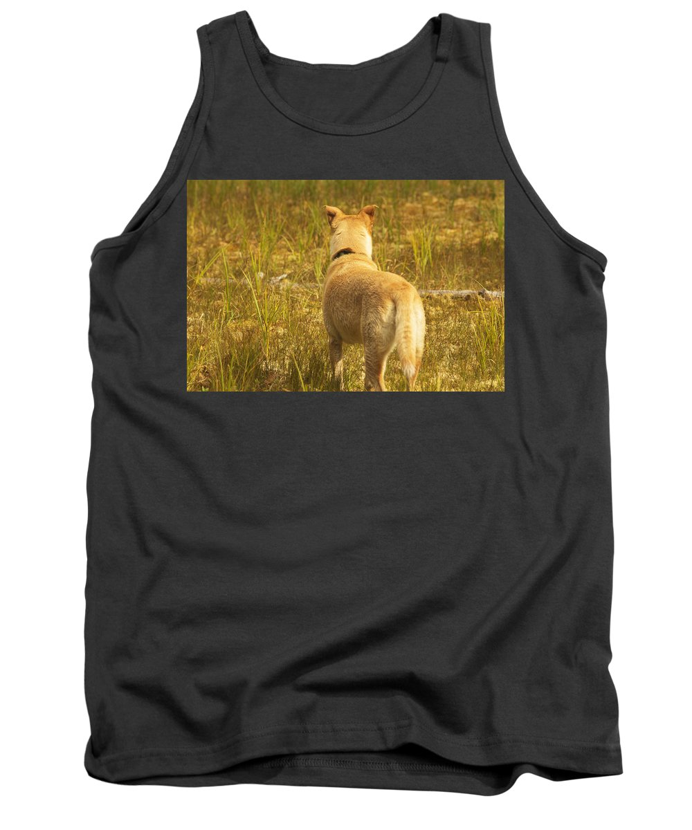 Dog Tank Top featuring the photograph What Does Maisie See by Belinda Greb