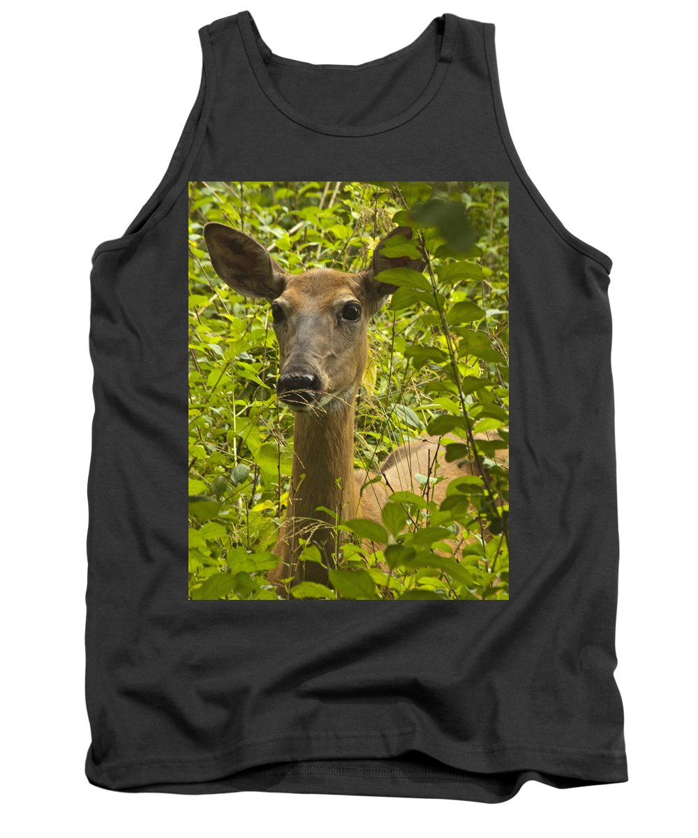 Doe Tank Top featuring the photograph Wild Doe by Darleen Stry