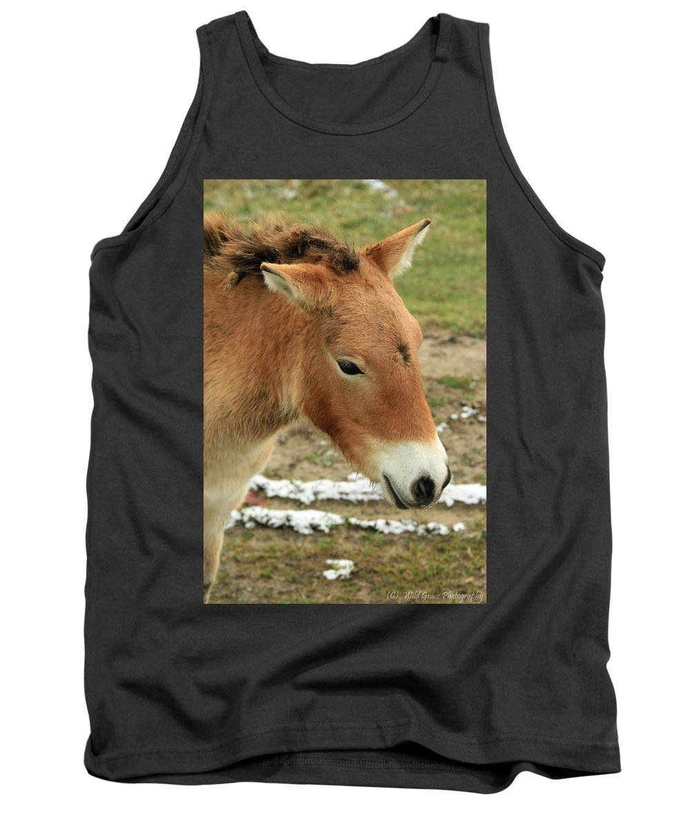 Horse Tank Top featuring the photograph Wild Horse by Crystal Heitzman Renskers