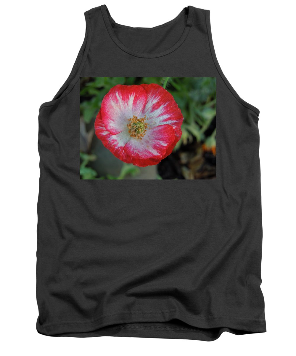 Flowers Tank Top featuring the photograph Winter Poppy by Diana Hatcher