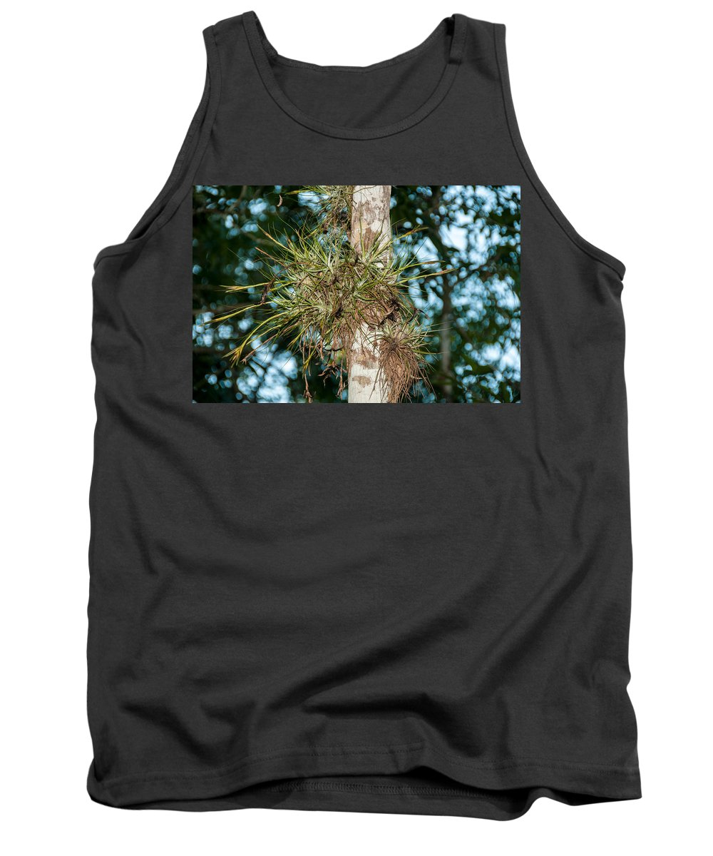 Mexico Quintana Roo Tank Top featuring the digital art Air Plants In Grupo Coba At The Coba Ruins by Carol Ailles