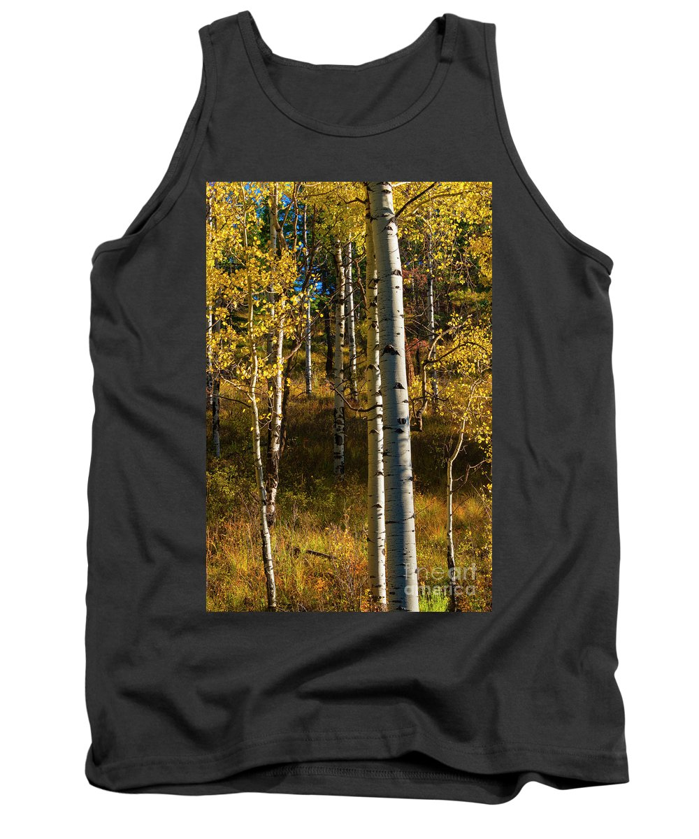 Aspen Tank Top featuring the photograph All That Is Gold by Mike Dawson