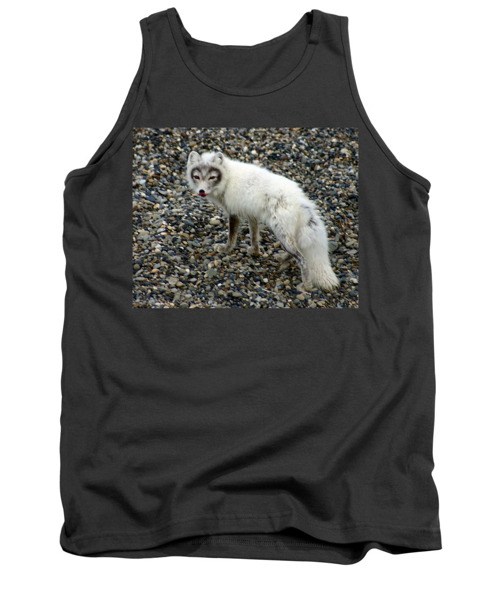 Arctic Fox Tank Top featuring the photograph Arctic Fox by Anthony Jones