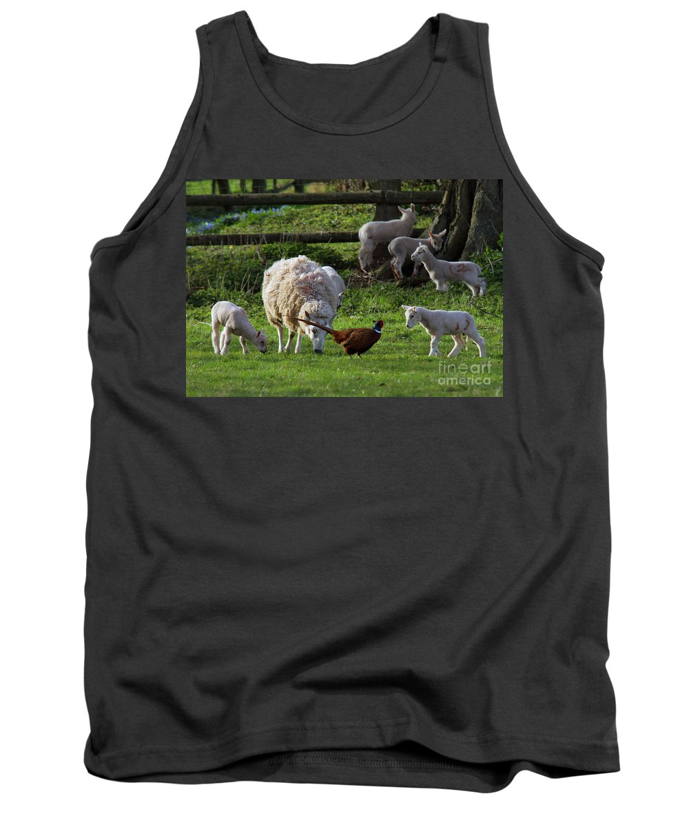 Pheasant Tank Top featuring the photograph Close Encounter Of The Third Kind by Angel Ciesniarska