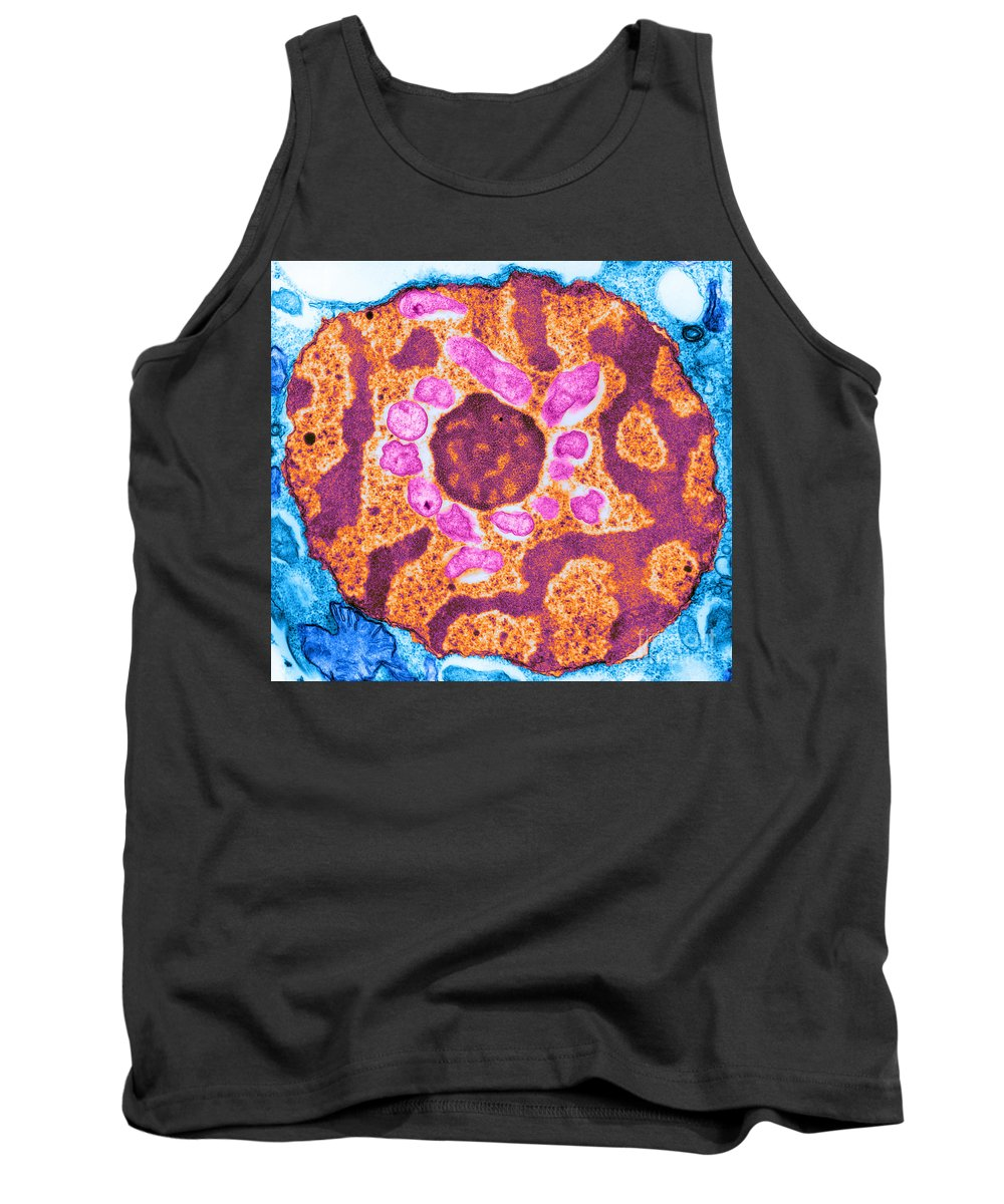 Science Tank Top featuring the photograph Endonuclear Bacteria In Trachelomonas by Biophoto Associates