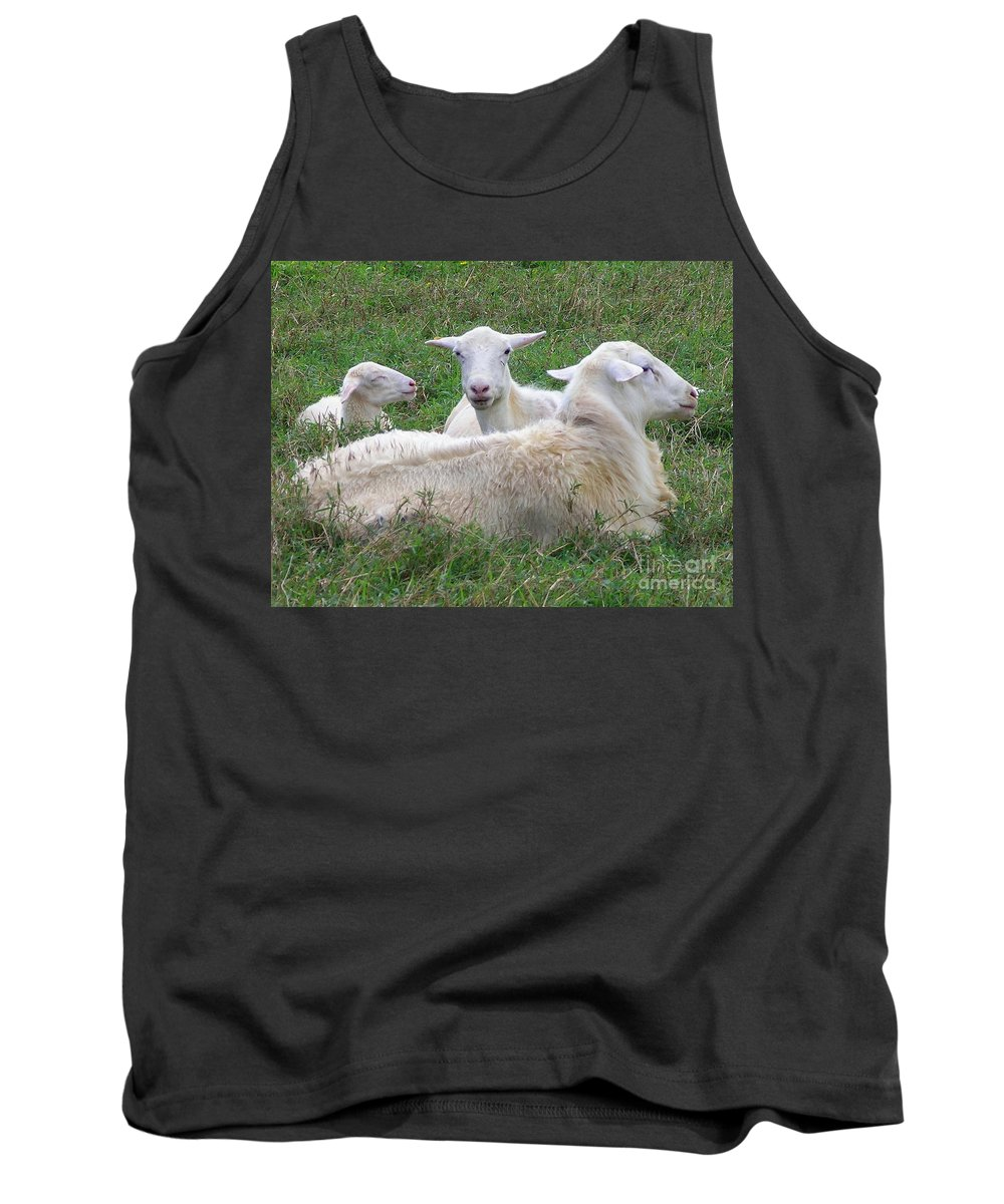 White Animals Tank Top featuring the photograph Goat Family by Mary Deal