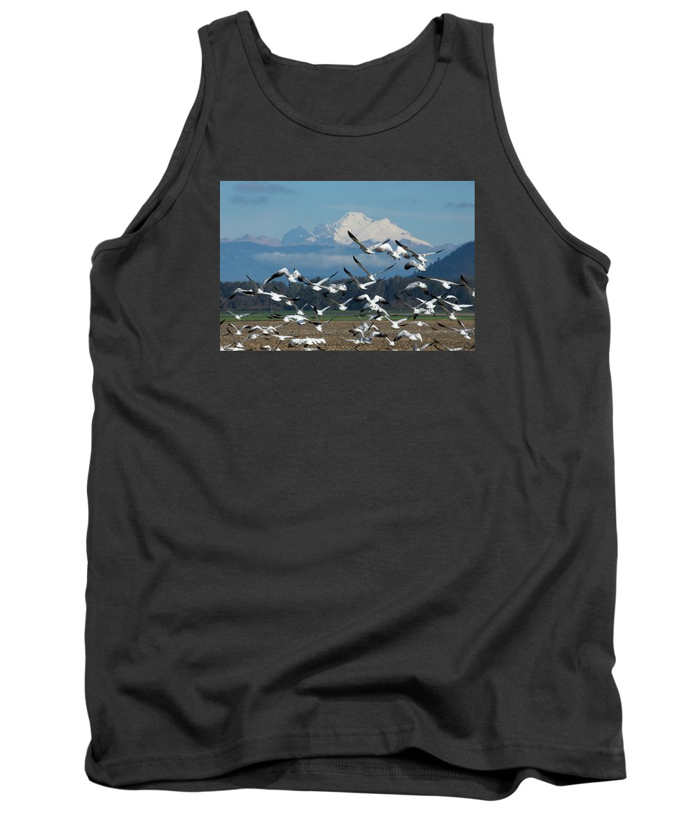 Snow Tank Top featuring the photograph Snow Geese In Skagit Valley by Bob Stevens