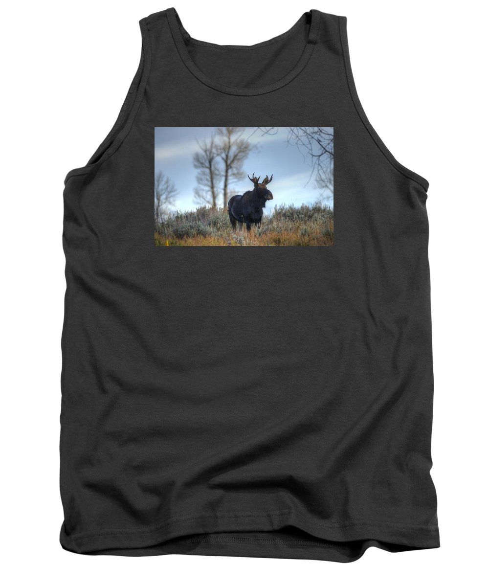 Moose Tank Top featuring the photograph Son Of A King by Dennis Blum