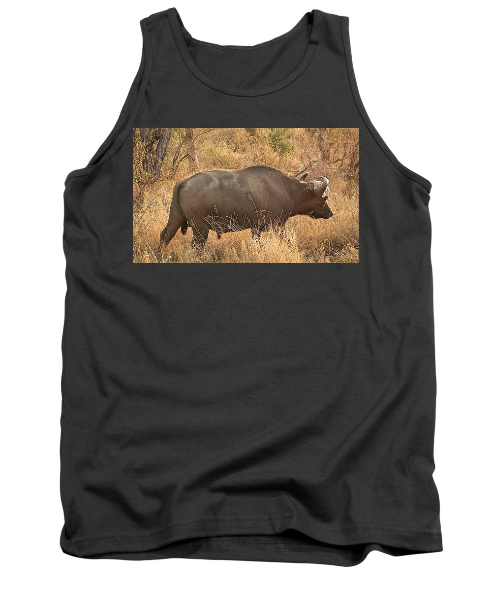 Buffalo Tank Top featuring the photograph Going For A Walk by Lisa Byrne