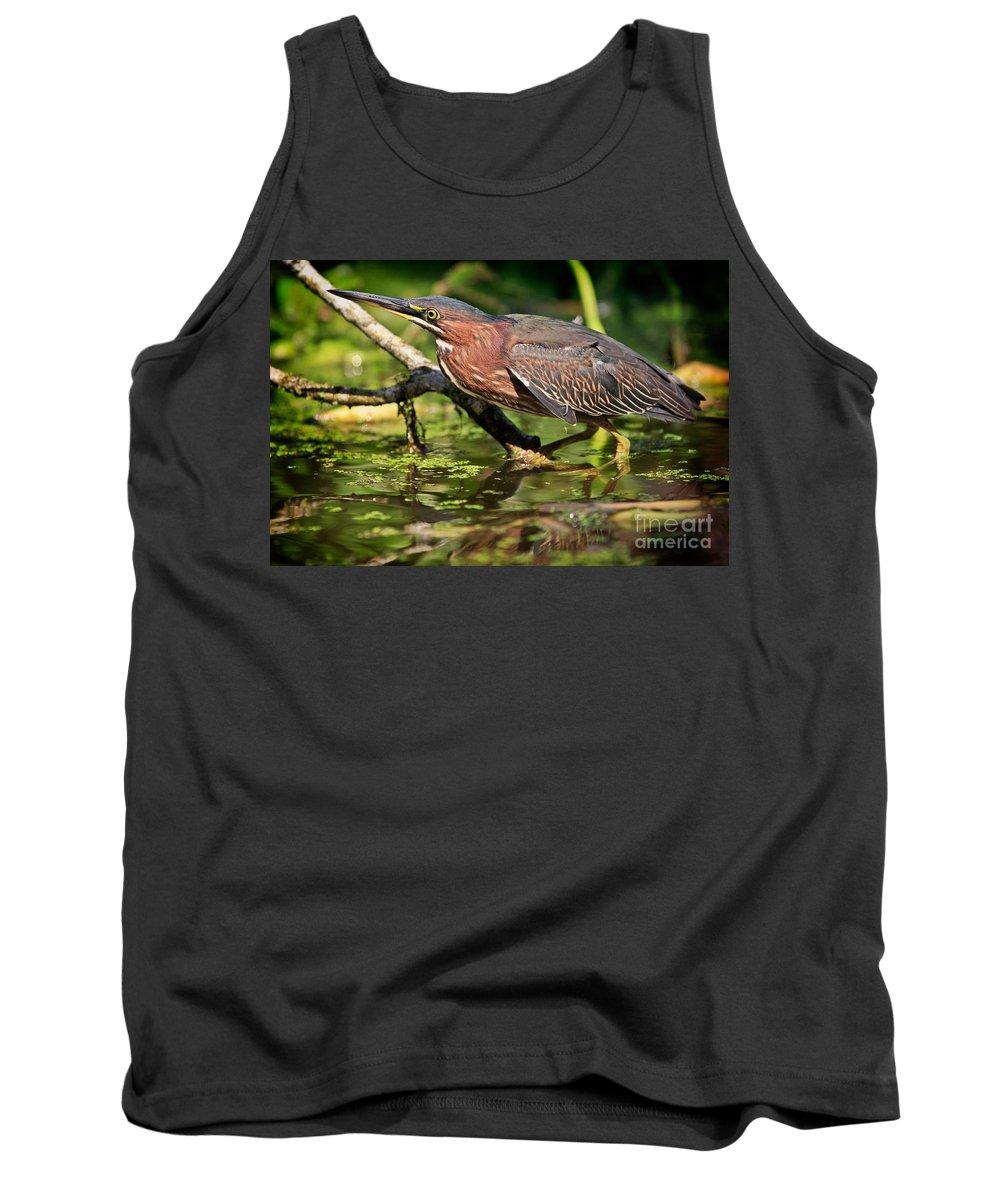 Green Heron Tank Top featuring the photograph Green Heron by Matt Suess