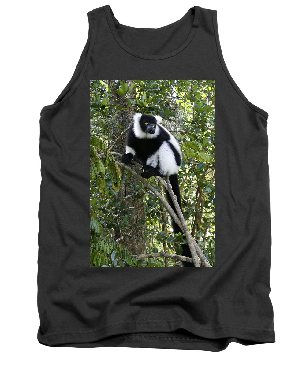 Madagascar Tank Top featuring the photograph Black And White Ruffed Lemur by Michele Burgess