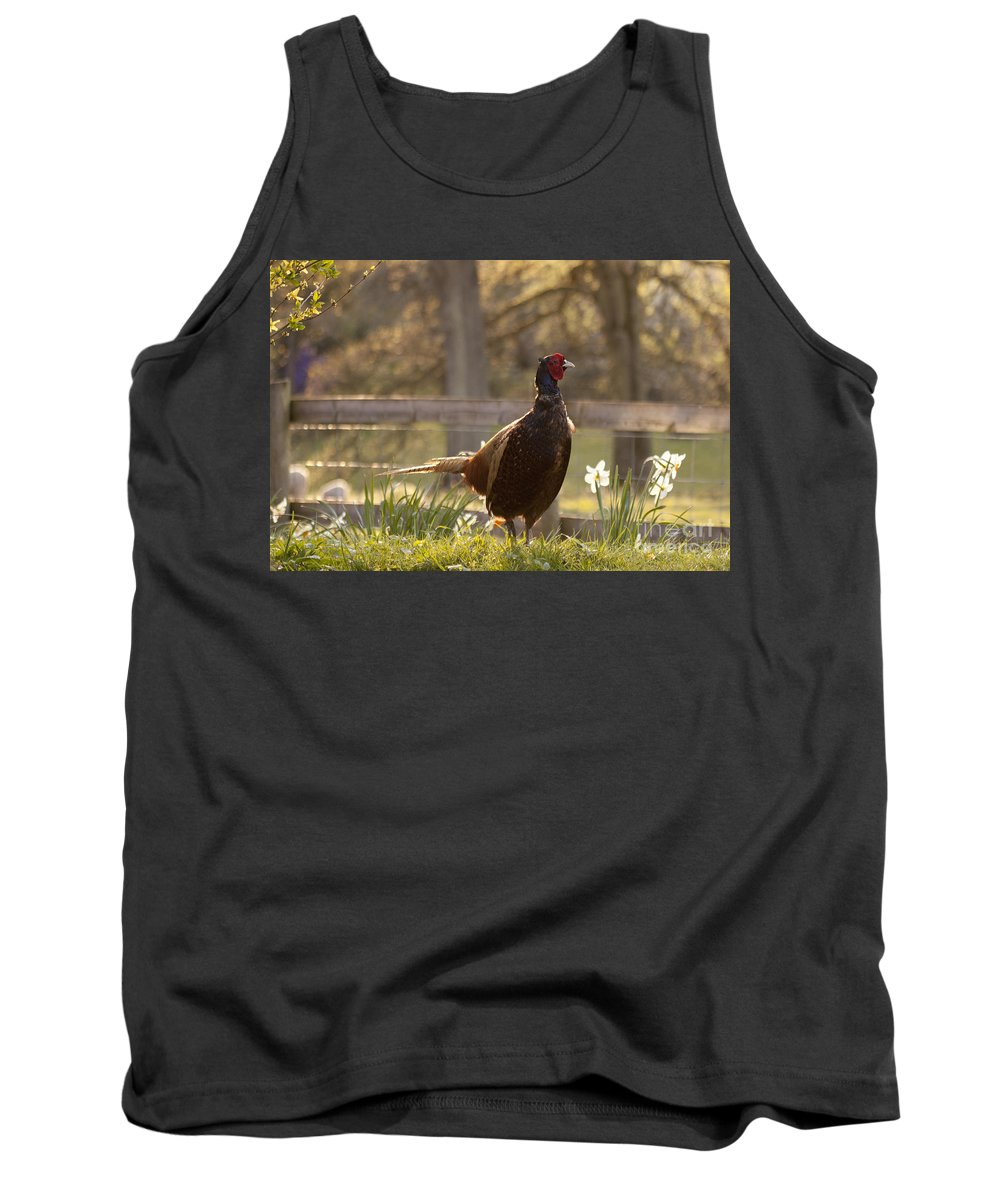 Pheasant Tank Top featuring the photograph Mr Pheasant by Angel Ciesniarska