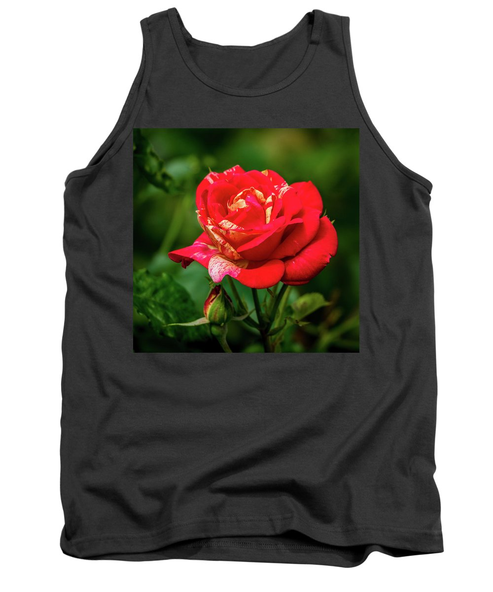 California Tank Top featuring the photograph A Rose In Los Gatos by Randy Herring