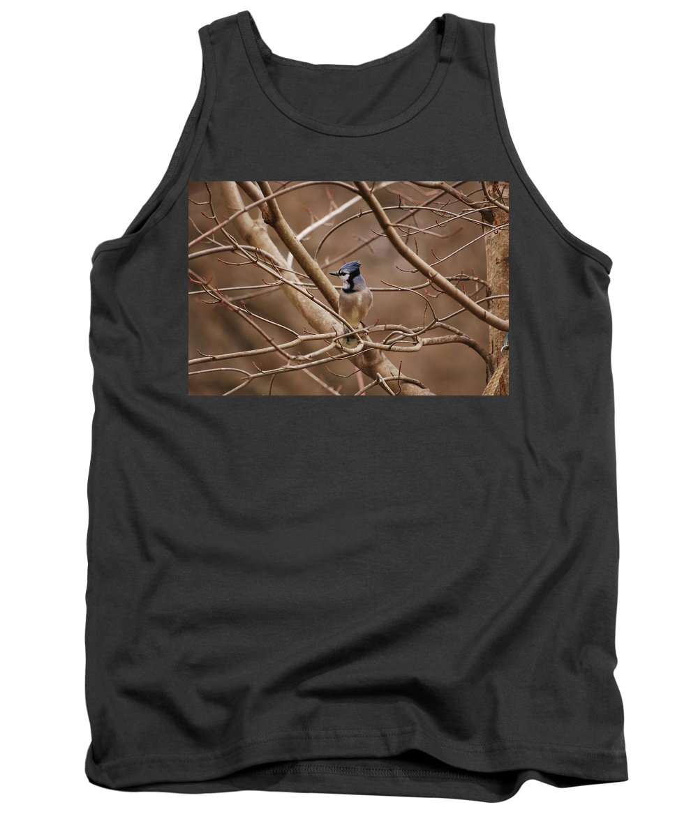 Bluejay Tank Top featuring the photograph A Touch Of Blue by Lori Tambakis