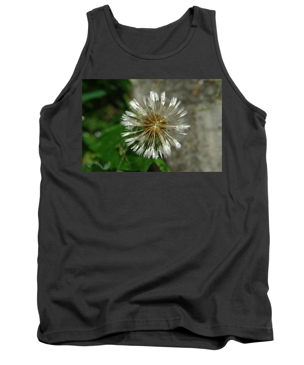 Dandelions Tank Top featuring the photograph A Wet Dandelion by Jeff Swan
