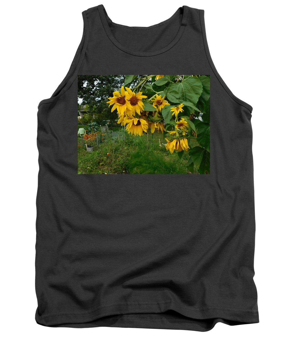 Sunflowers Tank Top featuring the photograph A Bit Ragged, Their Yellow Glory by Curtis Tilleraas