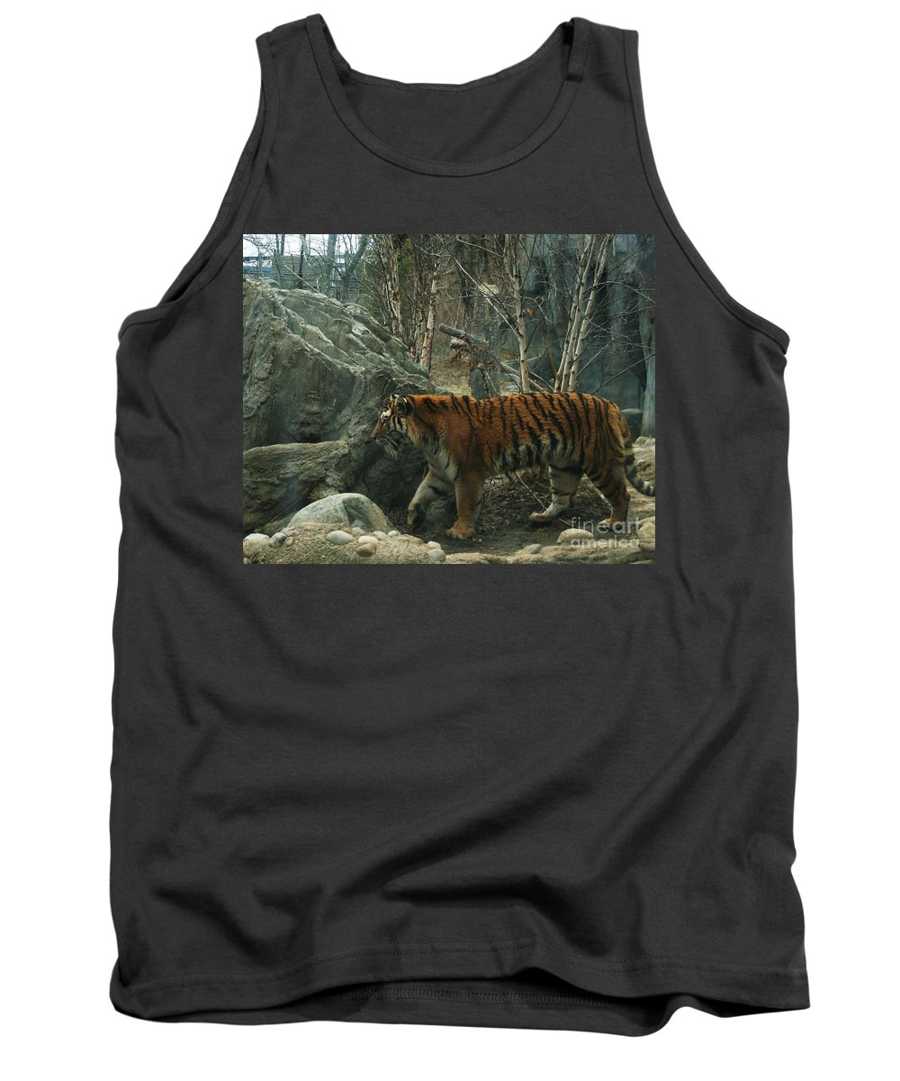 Tiger Tank Top featuring the photograph Amur Tiger by Dawn Downour