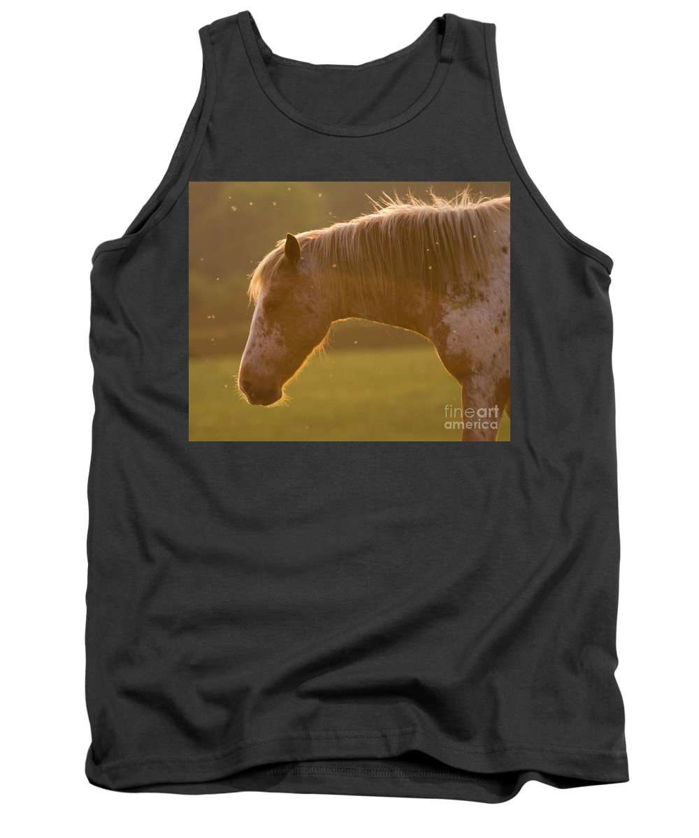 Horse Tank Top featuring the photograph Appaloosa Horse by Angel Ciesniarska