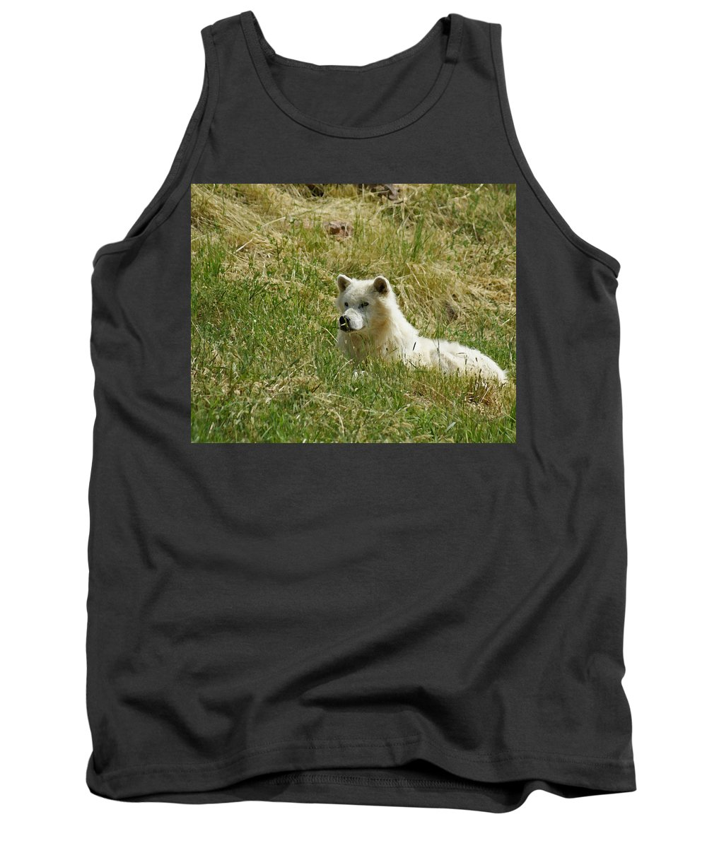 Animals Tank Top featuring the mixed media Artic Wolf 2 Dry Brushed by Ernie Echols