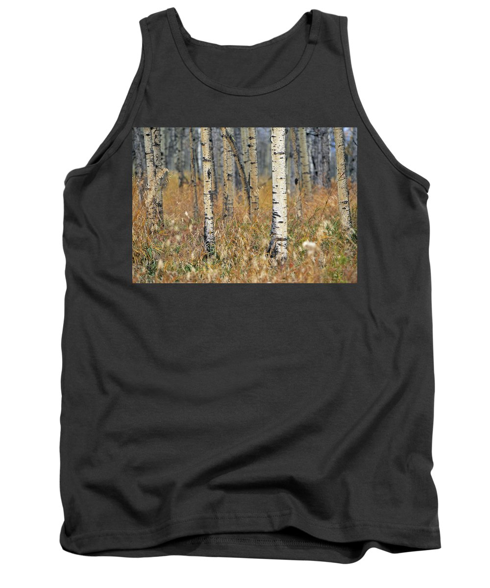 Light Tank Top featuring the photograph Aspen Forest, Mountain View County by Darwin Wiggett