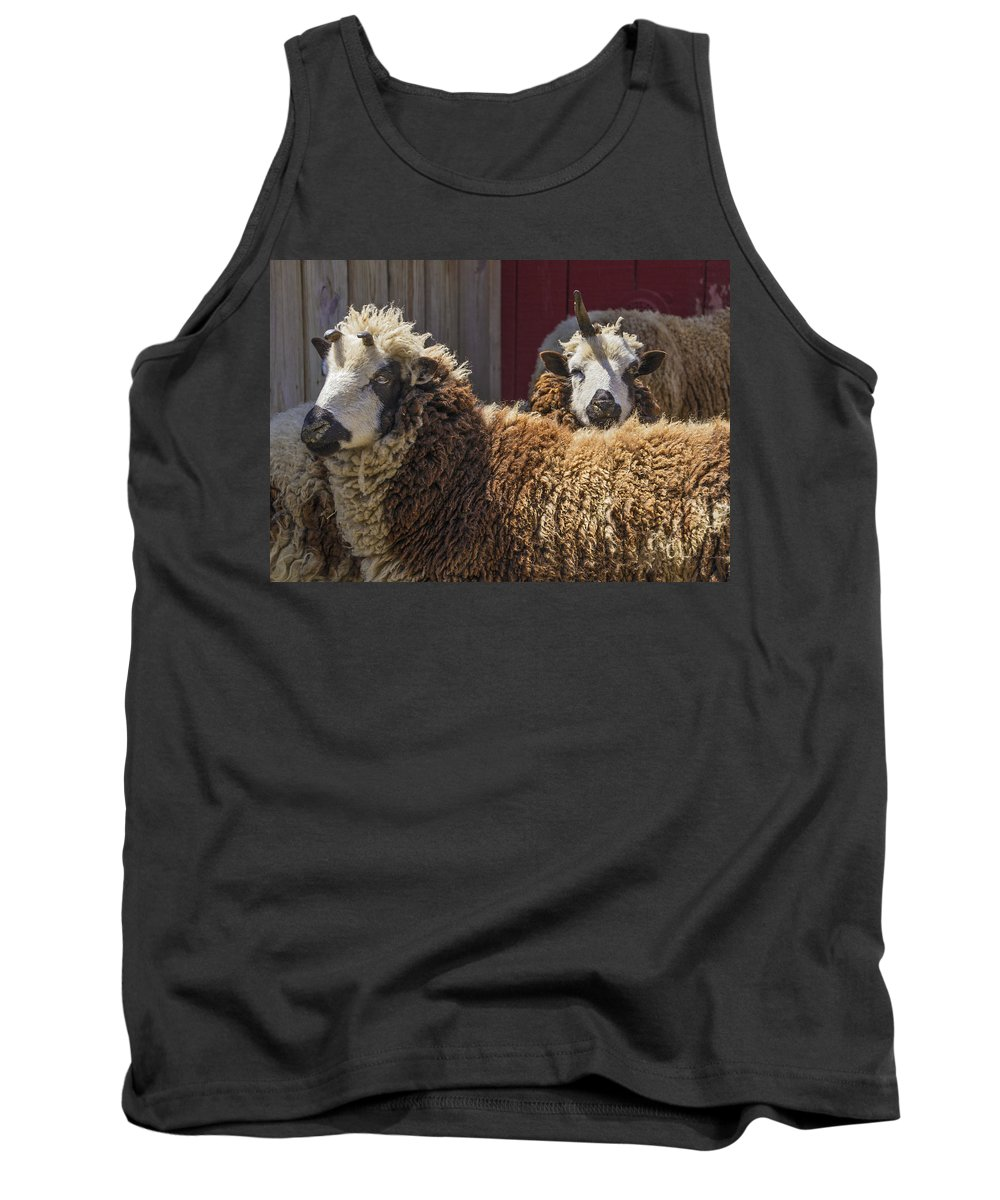 Sheep Tank Top featuring the photograph Ba Ba by Bob Slitzan