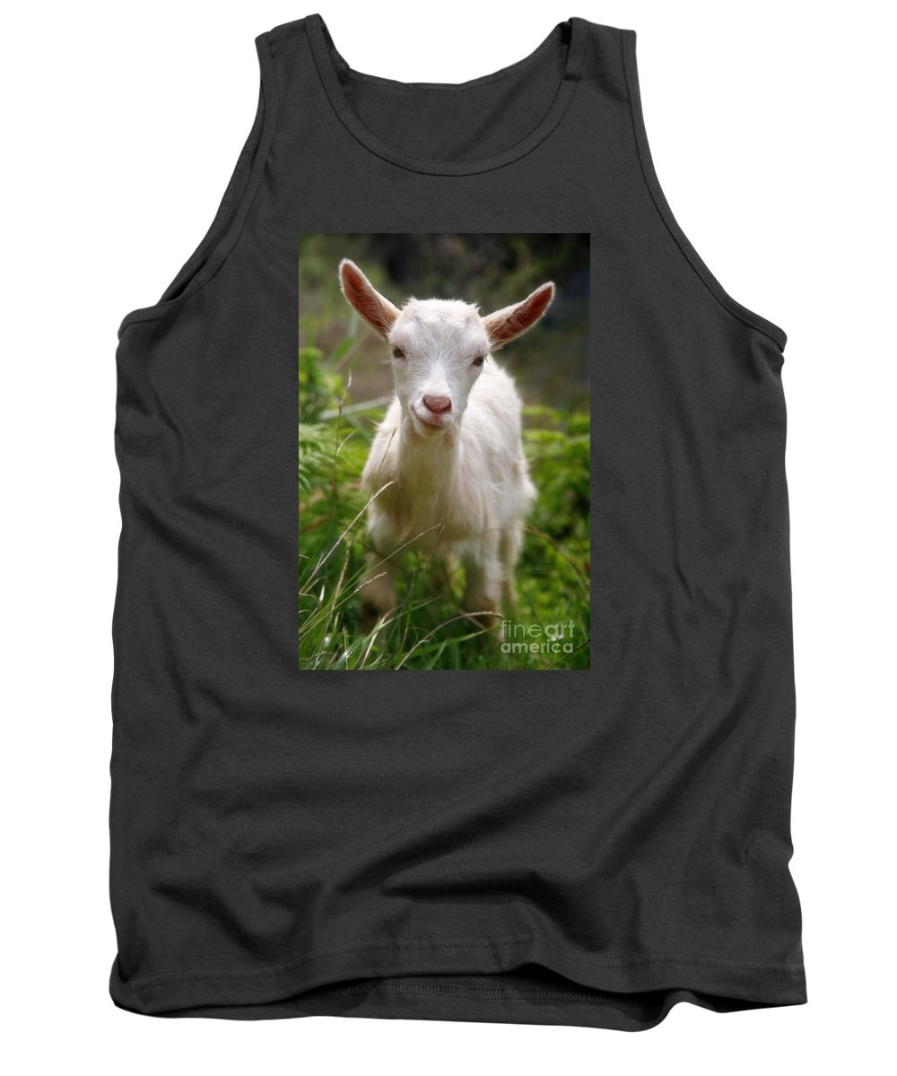 Animals Tank Top featuring the photograph Baby Goat by Gaspar Avila