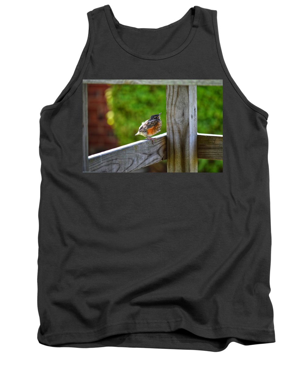 Robin Tank Top featuring the photograph Baby Robin by Joseph Caban