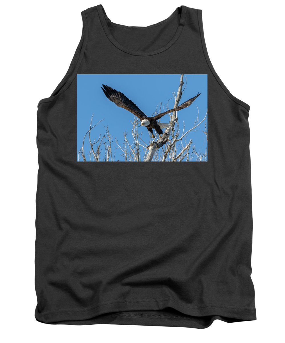 Bald Eagle Tank Top featuring the photograph Bald Eagle Shows Its Focus by Tony Hake